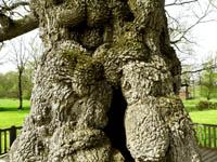 Le Refuge de L'arbre